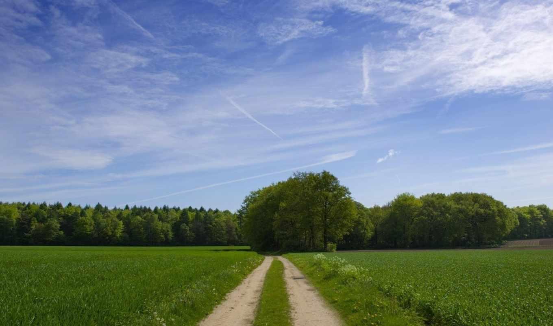 лес, дорога, resimleri, трава, manzara, дятлицы, участок, ломоносовский, место,