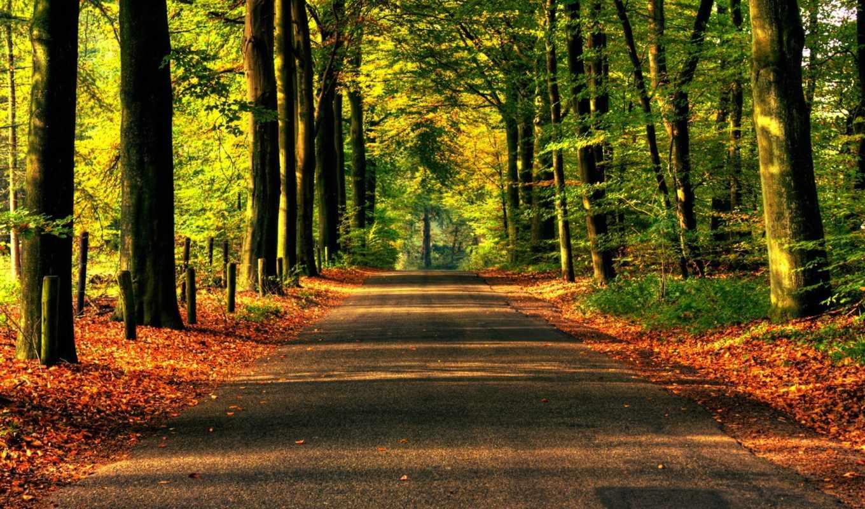 дорога, лес, деревя, асфальт, природа, лесу, осень,