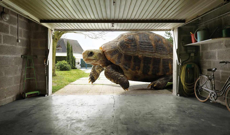 черепаха, большая, черепахи, огромная, домашние,