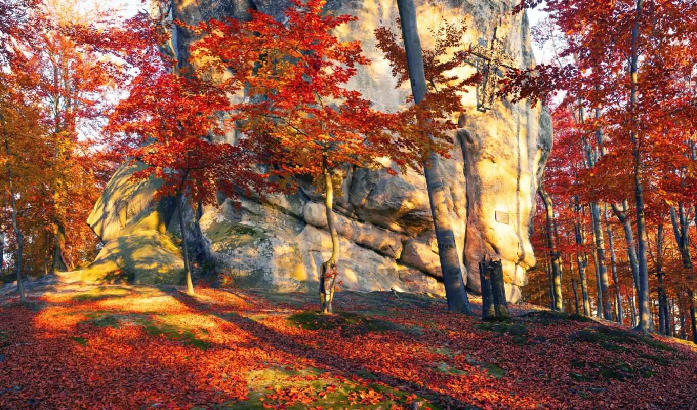 осень, дерево, лес, ukraine, камень, небо, leaf, zakarpattia, sun