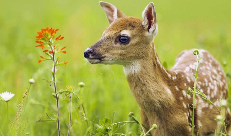 обои, цветы, полевые, обоев, животные, разделе, фо