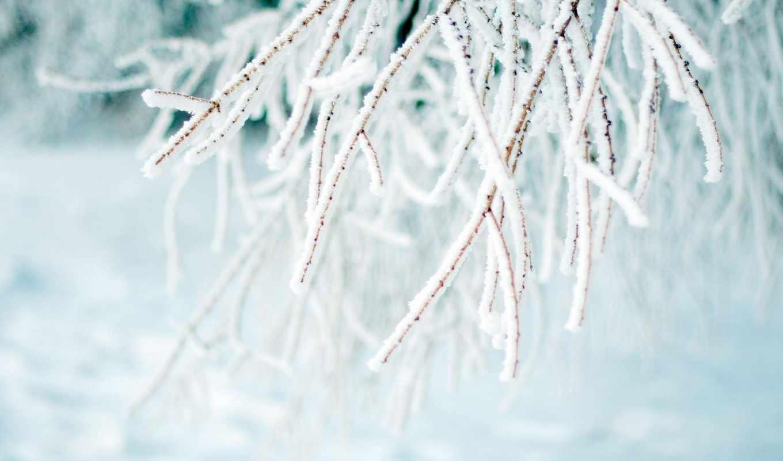 снег, иней, зима, макро, ветка,