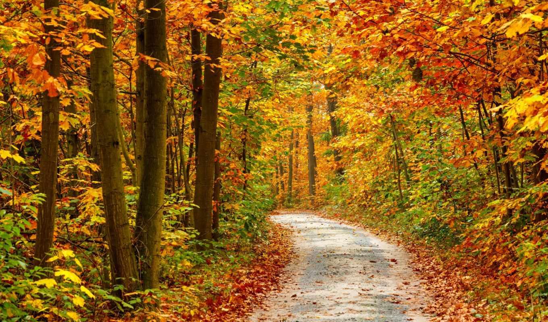 priroda, природа, листья, деревя, пасть, дорога, osen, colorful, les,