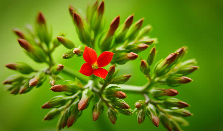 red, цветы, зелёный, ежедневное, обновление,