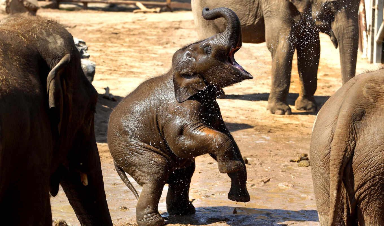 радость, слон, water, собака, настроение, red, small, кот, дружба, щенки,