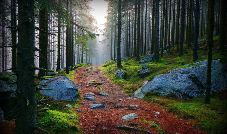 камни, лес, дорога, приода, картинку, картинка, мыши, кнопкой,