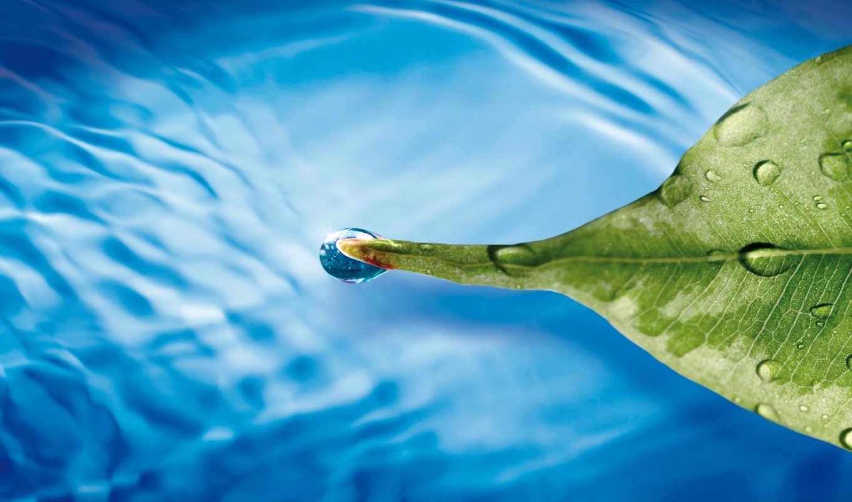 макро, подборка, выпуск, стиле, вода, лист, leaf, israel, код, und, mit, цветы, zur, green, капли, голубой, floating, bei,
