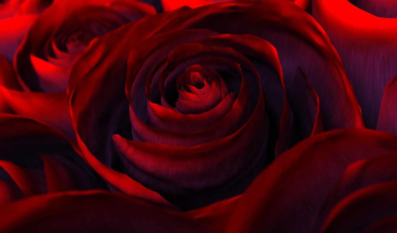 роза, цветы, красная, red, nature, roses,