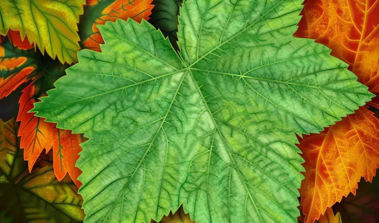 листья, exotic, windows, desktop,