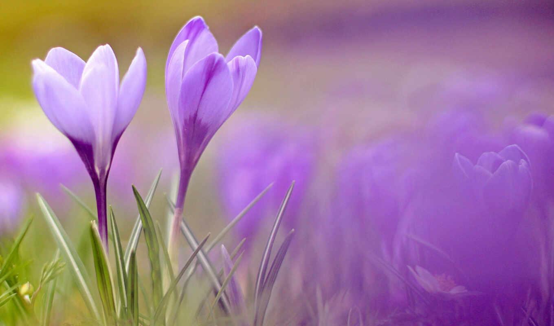 цветы, весенние, телефоны, весна,