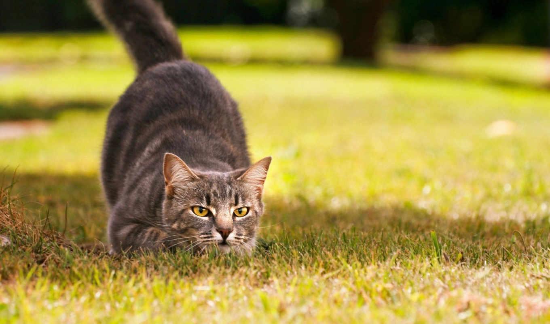 перед, прыжком, кошки, kot, траве, кошек, funny,