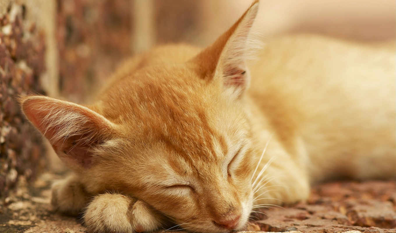 bool, кот, false, red, кошки, string,