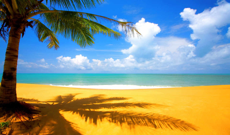 summer, desktop, free, explore, wallpapersafari, share,