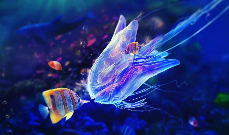 world, underwater, рыбки, pisces, jellyfish, фотографий, water, ocean, фотообои, под,