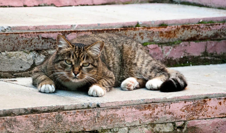 cats, funny, pics, gifs, часть, zhivotnye, милые, animal, кот, photos,