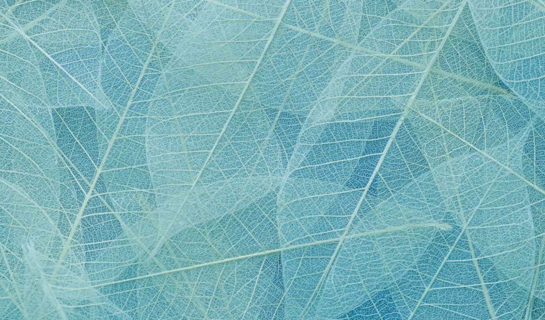 color, gradient, оттенок, leaf