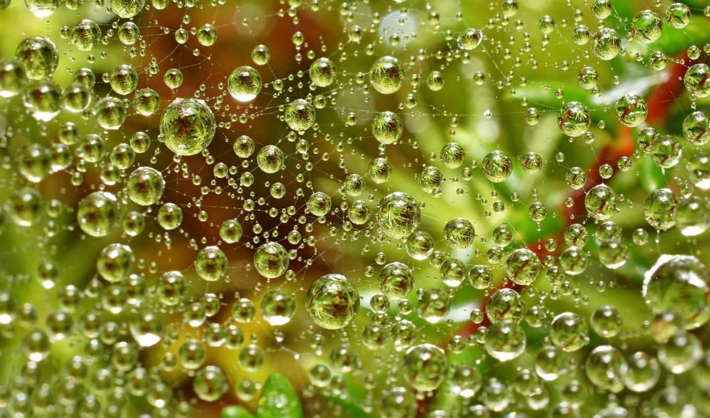 паутина, воды, капли, капельках, макро, паутине, зелень, вода,