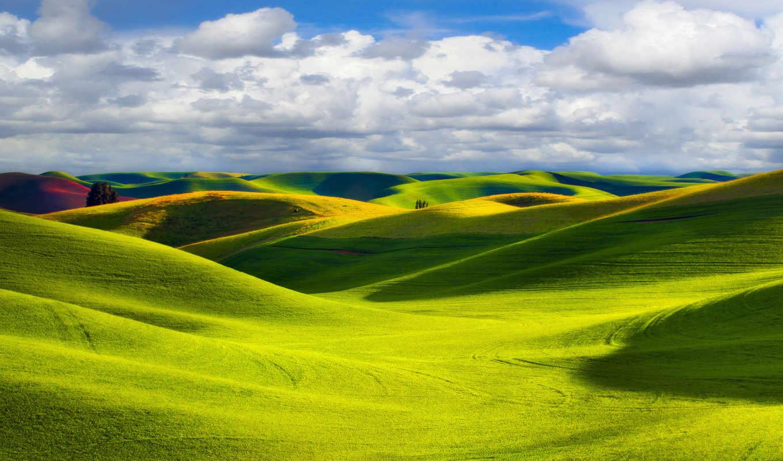 природа, трава, sun, зелёный, луг, landscape, день, поля, свет,
