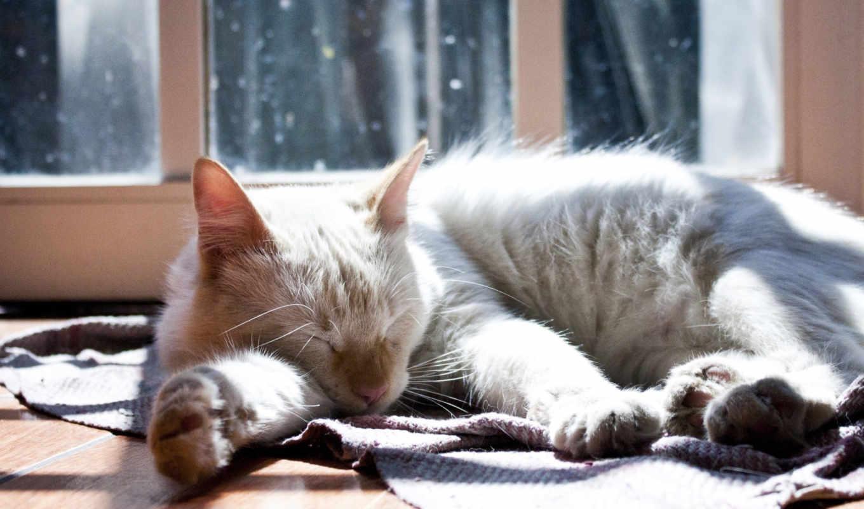 кот, тепло, спать, sun, mat,