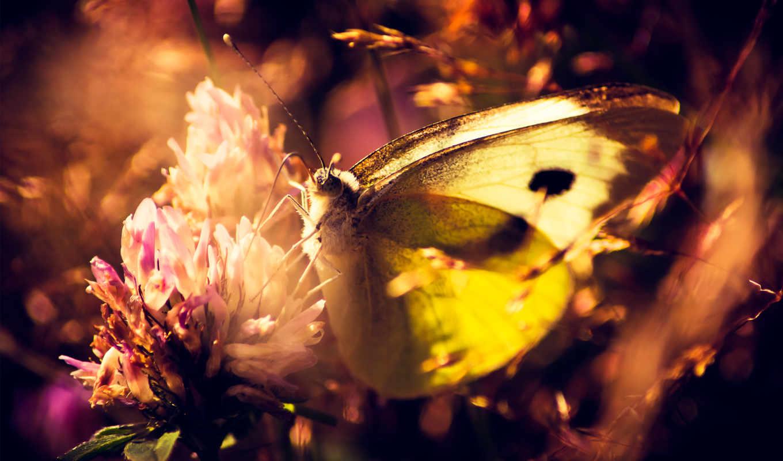 бабочка, макро, цветы, природа, растения, cvety,