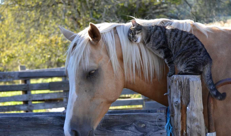 приколы, кот, лошадь, дружба, фотографий, предлагаем, лошади, раскрыть,