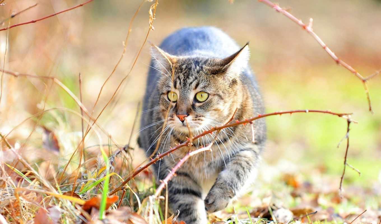 коллекция, кот, трава, интересно, смотреть, user