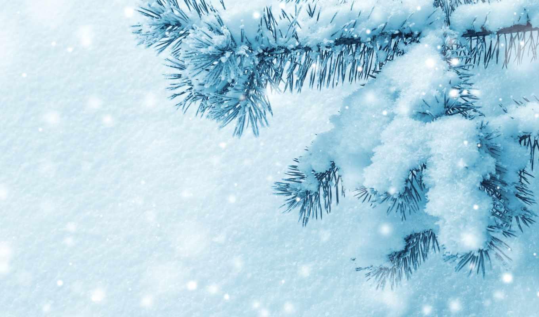 снег, winter, красавица, ветки,