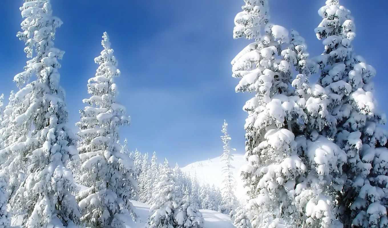 winter, елки, снег, холод, снеегу, совершенно, свой,
