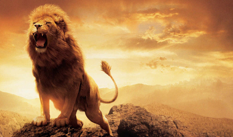narnia, aslan, lion, chronicles, desktop, free,