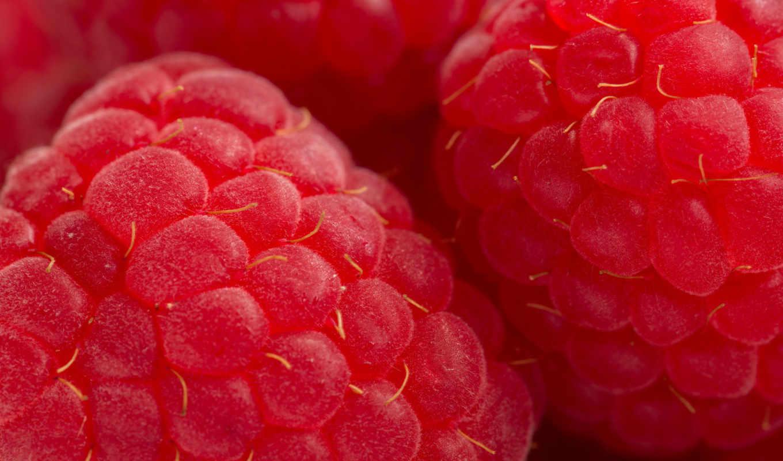 малина, красная, ягода, еда, макро,