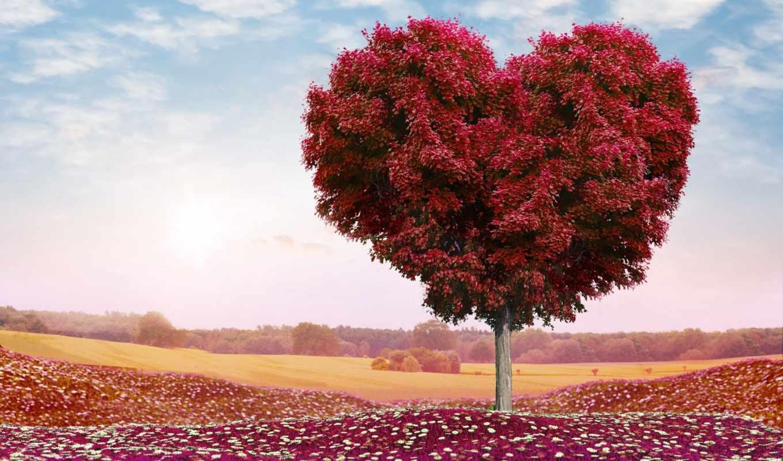 сердце, дерево, love, день, valentine, романтика, поле,