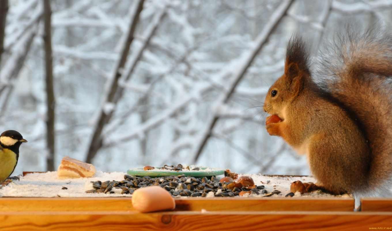 день, feeder, winter, снег, руками, своими, семечки, есть, белки,