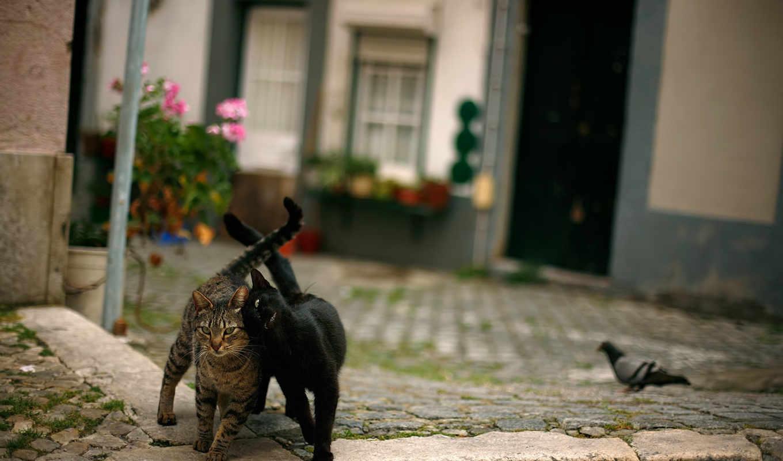 animals, португалия, кошки, cats, gatos, телефон, pinterest,