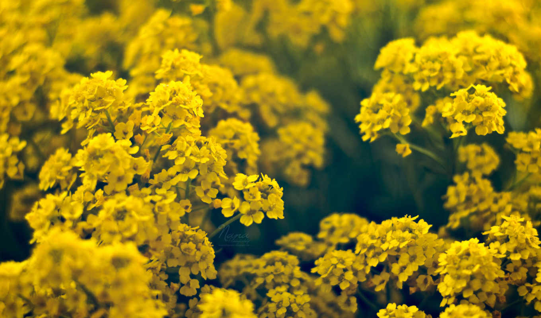 Цветы желтые весна flowers картинка
