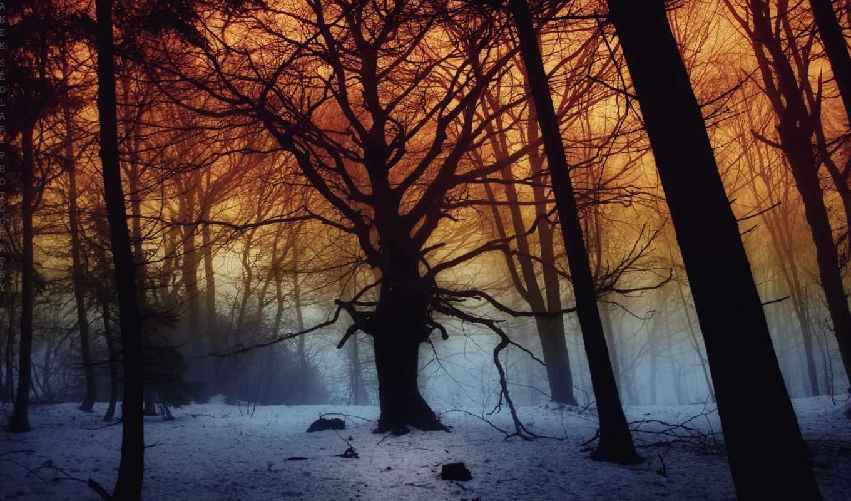 лес, зима, туман, janek, sedlar, пейзаж, снег, картинка, фотографа, картинку, правой, ней, дек, скачивания, кнопкой, sunset, save, мыши, выберите,