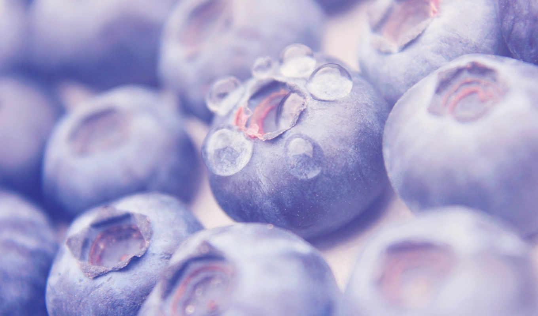 макро, drops, плод, water, черника, природа, warm, purple, fruits,