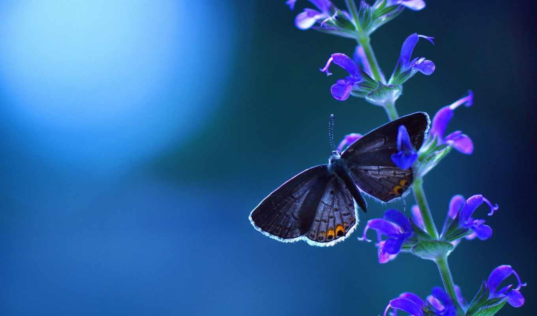 бабочка, разрешениях, разных, цветах, нояб, цветы, сидит,