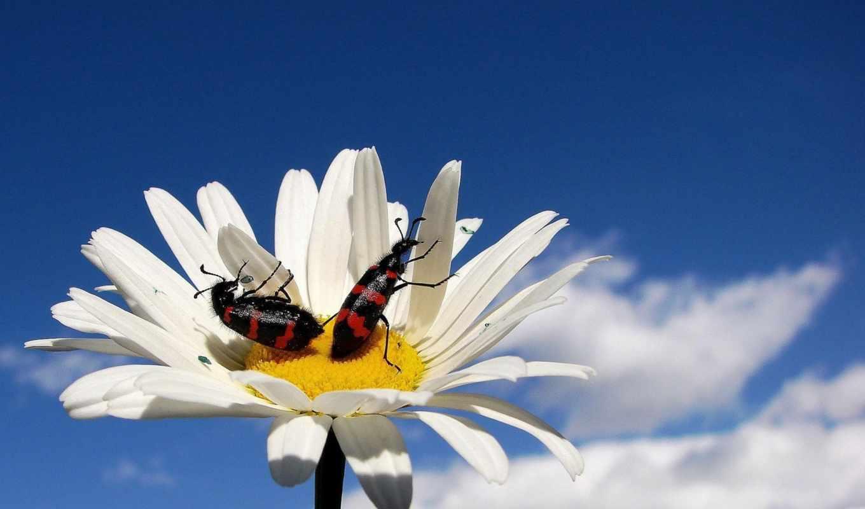 день, world, them, среда, are, beetles, celebration, вырасти, let,