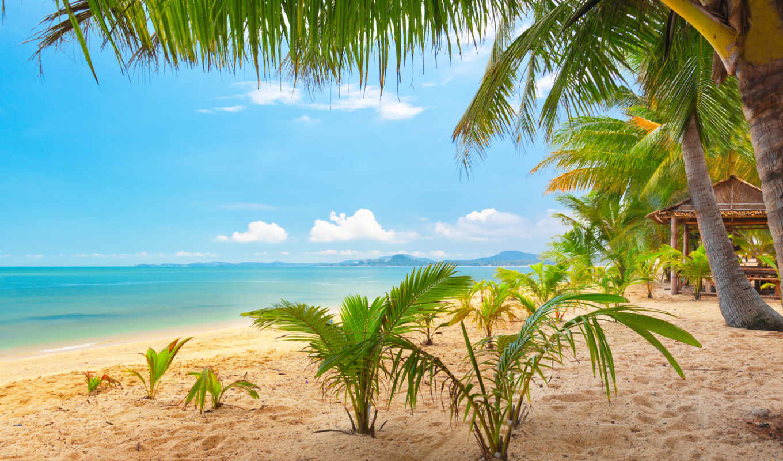sea, landscape, категории, телефон, природа, tropical, sand, февр, sky, palm, trees, times,
