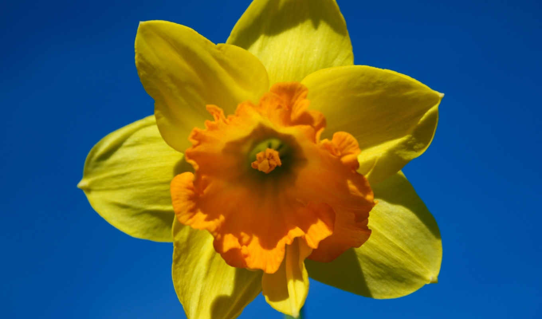 весна, sunny, iphone, ipad, standard, sxga, uxga, fullscreen,