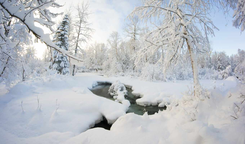 снег, собака, landscape, природа