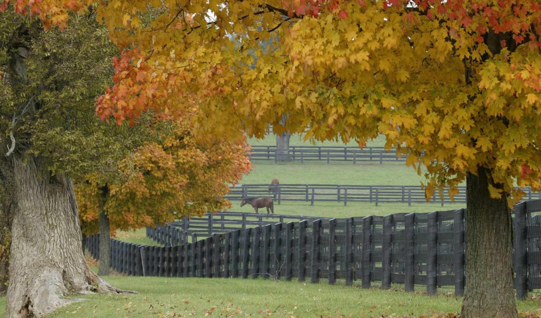 лошадиная, ферма, трава, листья, забор, деревья, игра, лошадь,