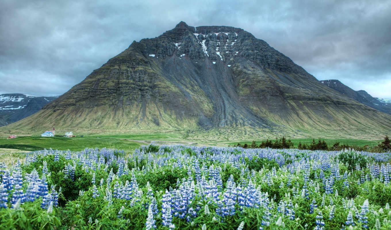 гор, горы, гора, цветы, долина,