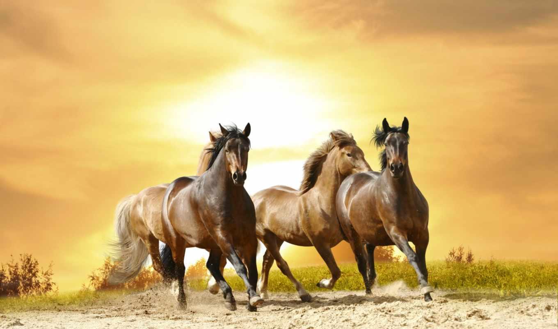 лошади, фотообоев, интерьера, лошадь, смотреть, каталог, доставка, стен, фотопанно, изображений,