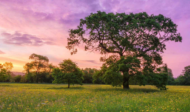 природа, телефон, поле, количество, landscape, деревья, категории, id, закат,