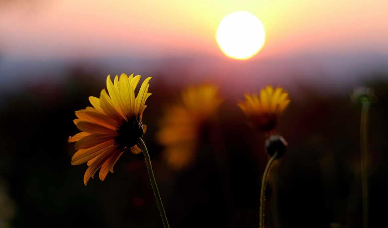 , оранжевый, закат, поле, цветочек