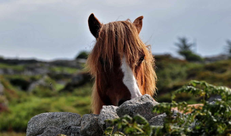 pinterest, cheval, zwierzęta, ecran, tapeta, fonds, les,