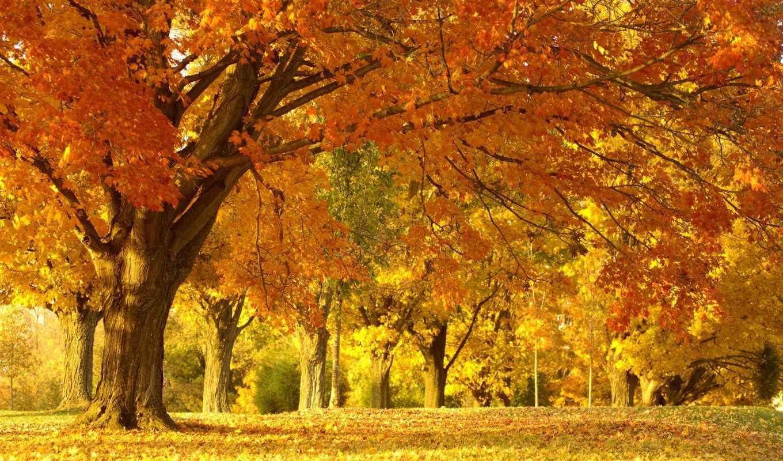 природа, деревья, лес, парк, пейзаж, листва, autumn, красота, желтый, trees,