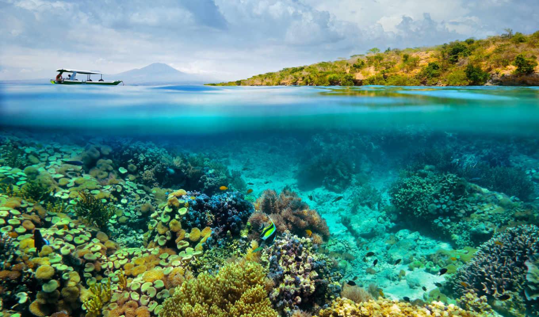 bottom, морское, рыбы, кораллы, море,