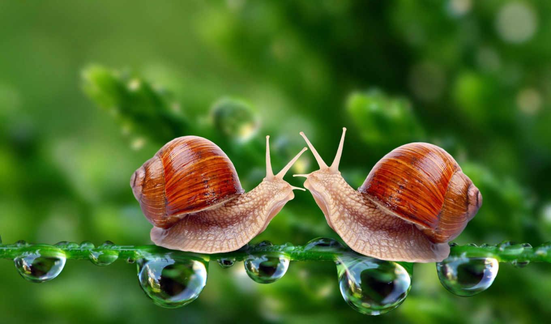 улитки, snail, красивые,